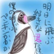 どうぶつ図鑑~フンボルトペンギン~
