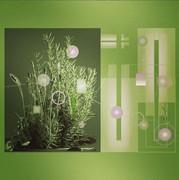 植物 写真 図形