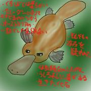 どうぶつ図鑑~カモノハシの奇妙な生態~