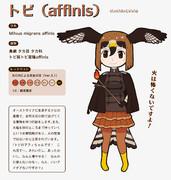 【地味すごオリフレS】トビ(affinis)