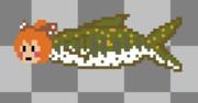 山女魚ですか(魚)