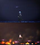 天の光は全て星 海の光は全て敵