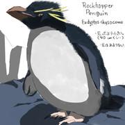 どうぶつ図鑑 イワトビペンギン