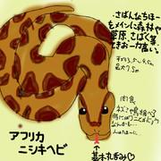 どうぶつ図鑑~アフリカニシキヘビ~