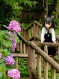 紫陽花とナズ