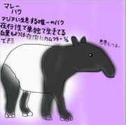 どうぶつ図鑑~マレーバク~