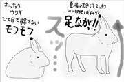 どうぶつ図鑑~ホッキョクウサギ~