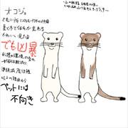 どうぶつ図鑑~オコジョ~