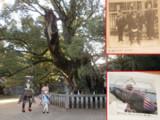 重桜ゆかりの地を訪ねて~戦勝祈願の神社