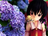 紫陽花と霊夢と