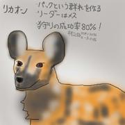どうぶつ図鑑~リカオン~