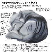どうぶつ図鑑 タイリクオオカミ(シンリンオオカミ)
