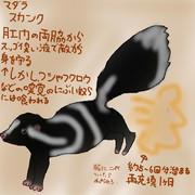 どうぶつ図鑑~マダラスカンク~