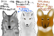 どうぶつ図鑑~狼群団~