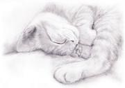 猫は1日に大体14時間前後睡眠をします。