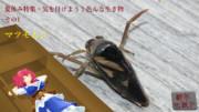 【夏休み特集・気を付けよう!色んな生き物-その1】 マツモムシ