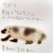 どうぶつ図鑑~クズリ~