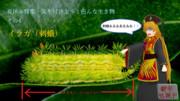 【夏休み特集・気を付けよう!色んな生き物-その4】 イラガ【虫注意】