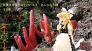 【夏休み特集・気を付けよう!色んな生き物-その5】 カエンタケ