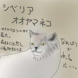 どうぶつ図鑑~シベリアオオヤマネコ~