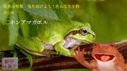 【夏休み特集・気を付けよう!色んな生き物-その9】 二ホンアマガエル