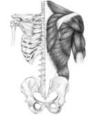 背中解剖図