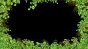 植物のフレーム(背景)