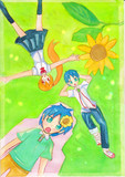 summer and sunflower