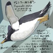 どうぶつ図鑑 ジェンツーペンギン