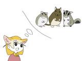 袋鼯鼠+天竺鼠+姫絹毛鼠+砂漠姫狐