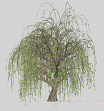 【MMD】巨大な柳の木【PMX配布】