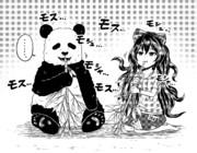 パンダと紫苑
