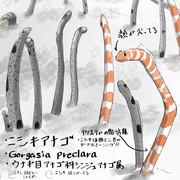 セルフどうぶつ図鑑2 ニシキアナゴ