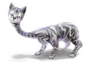 しっぽと体の順番を間違えた猫