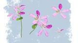【MMDアクセサリ配布】バウヒニアの花