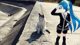 ミクさんと猫