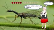 【冬休み企画クイズ・マイナー昆虫列伝-その2】ウスバカゲロウの仲間