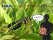 【冬休み企画クイズ・マイナー昆虫列伝-その5】プレゼントを使う虫
