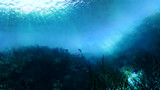 【フリー素材】アニメ風の海・海底・海中 その2
