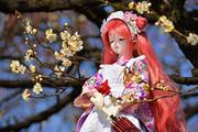 東風吹かば 匂ひおこせよ 梅の花 主なしとて 春を忘るな