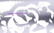ぶどう ※透過効果・白抜き・おむ08516