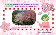 JR8DAGのAM & QRP ホームページの壁紙(桜2019)