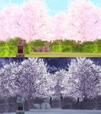 桜の森ステージ&スカイ
