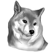全てを悟った野獣先輩に似てる犬