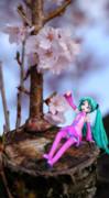 ちっちゃいミクと今年の桜。