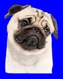 アンニュイ先輩っぽい上司に不正CADを使わされる犬BB