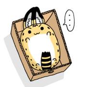 箱入りサーバルちゃん