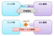 ニボルマブの作用機序