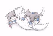 ラッコ提督と吹雪猫と磯波猫