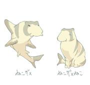 ねこザメ猫